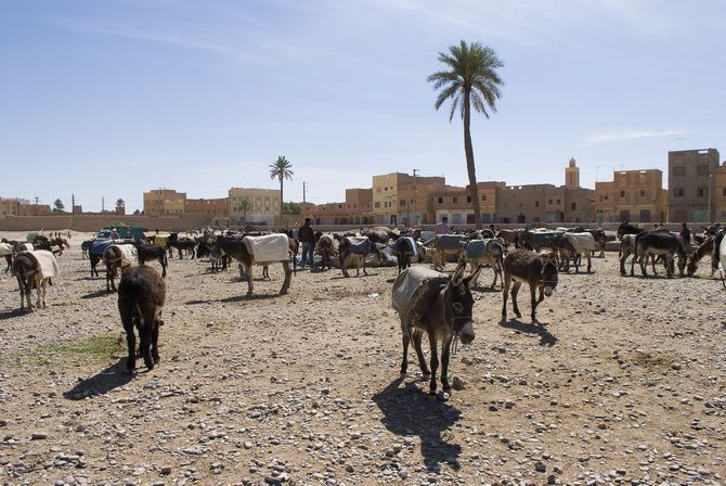 Donkey   parking space in the village of rissani, next to Merzouga.